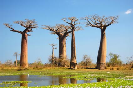 Erlebnisreiche Treckingtour durch die afrikanische Insel Madagaskar