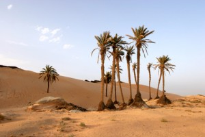 Oasen in Tunesien