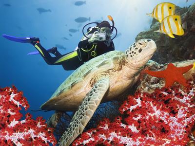 Das Great Barrier Reef liegt vor der Küste von Queensland in Australien und besteht aus etwa 2.900 einzelnen Korallenriffen, 71 Koralleninseln und 900 Inseln.