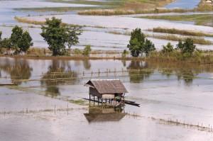 Felder_in_Myanmar