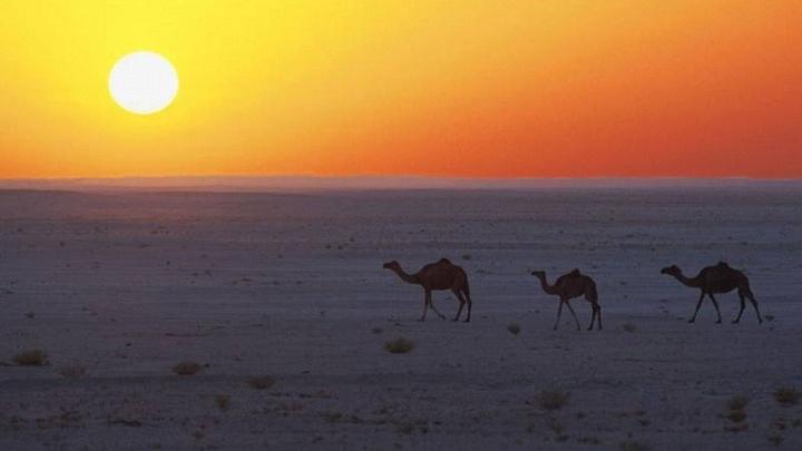 Ein Hauch von 1001 Nacht Beim Trendreiseziel Oman trifft Tradition auf Moderne